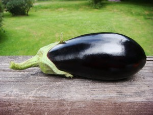 Our first eggplant - in early July!