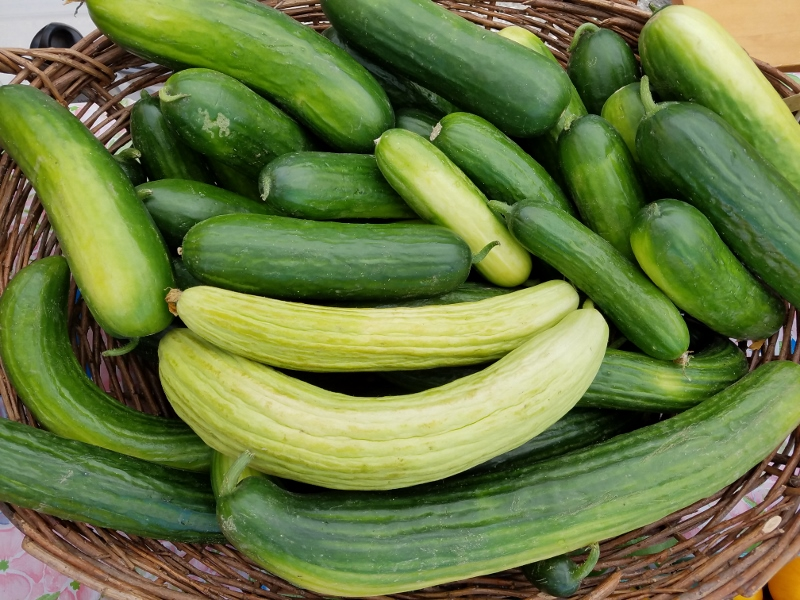 Cucumbers_small